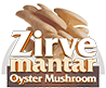 Zirve Mantar